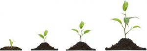 1-Introductie-Alles-wat-je-aandacht-geeft-groeit-Ellen-Oudehinken